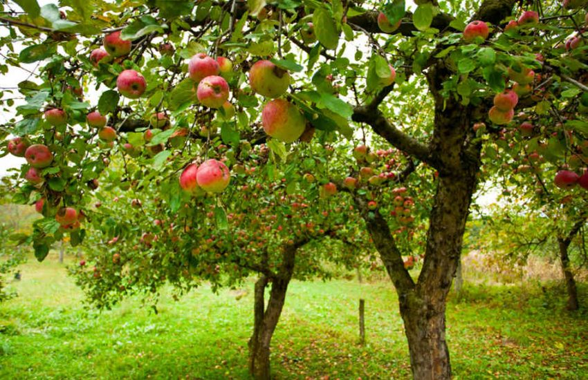 12-What is Best for Garden of Fruit Bearing Trees in Terms of Pest Control